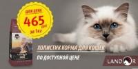 Landor Cat