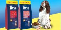 Brit Premium dog L